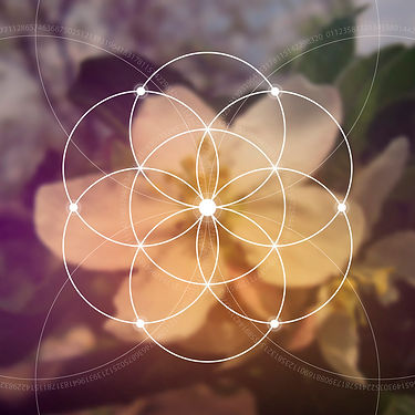 flower of life geometry Liv Woodford, As