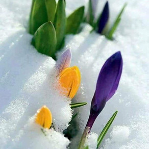March 20 Spring Equinox: A New Flowering