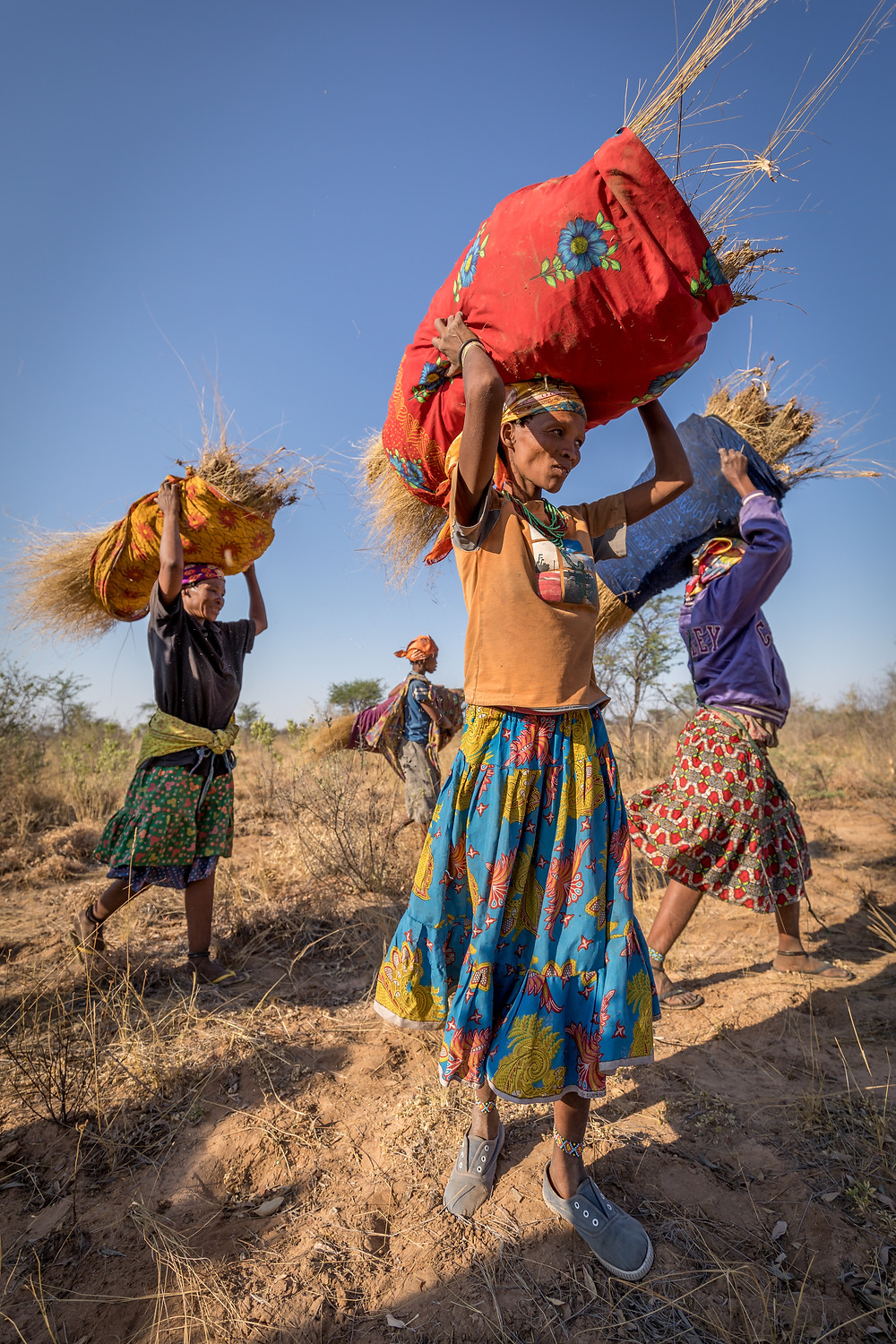Ju/Hoansi women gathering grasses to built a new hut
