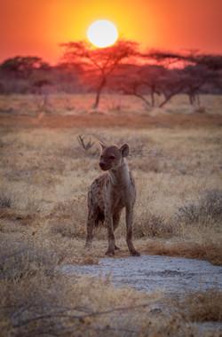 Old Way - Namibia-210
