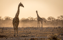 Old Way - Namibia-219