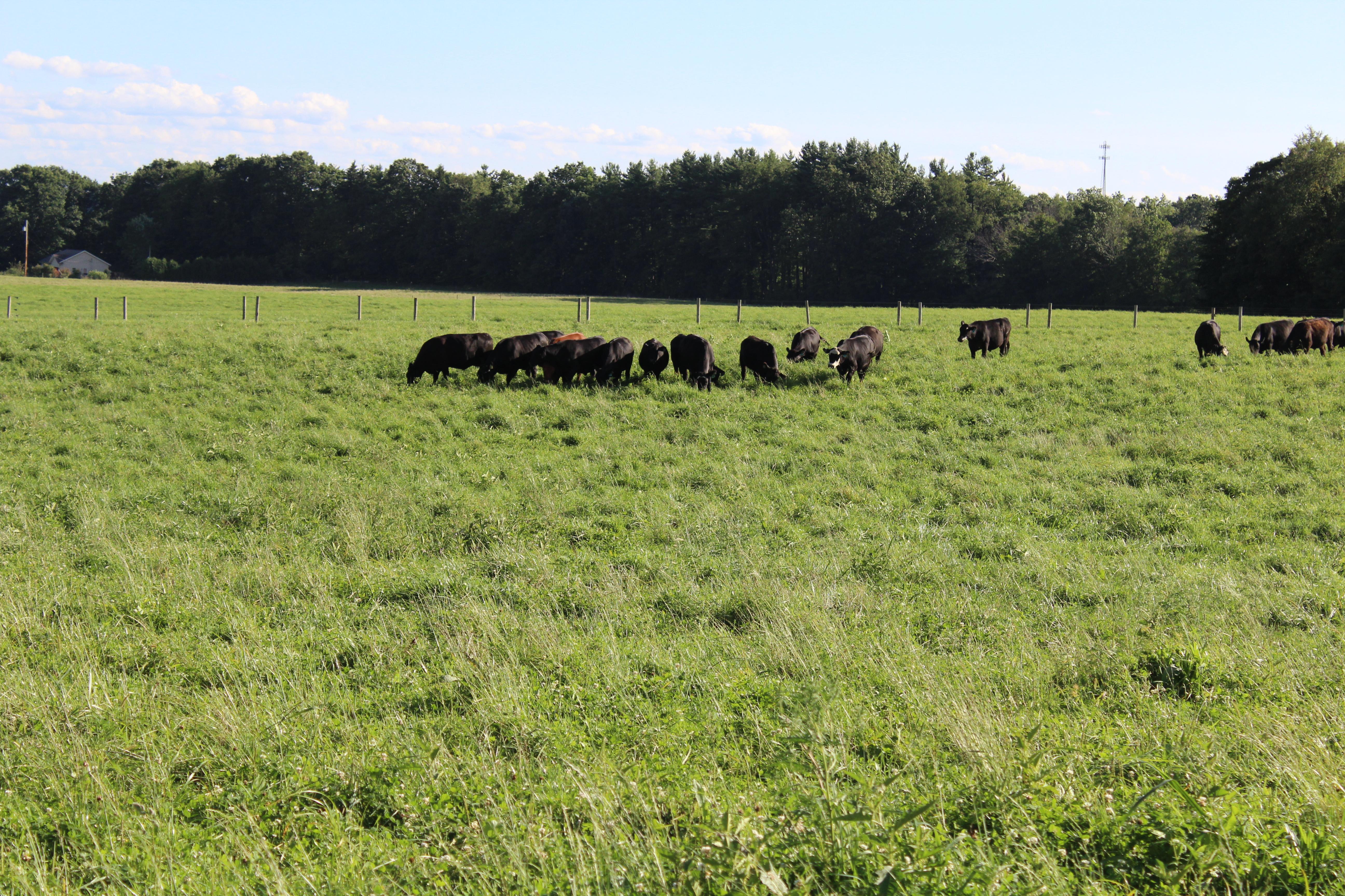 Herd Habits
