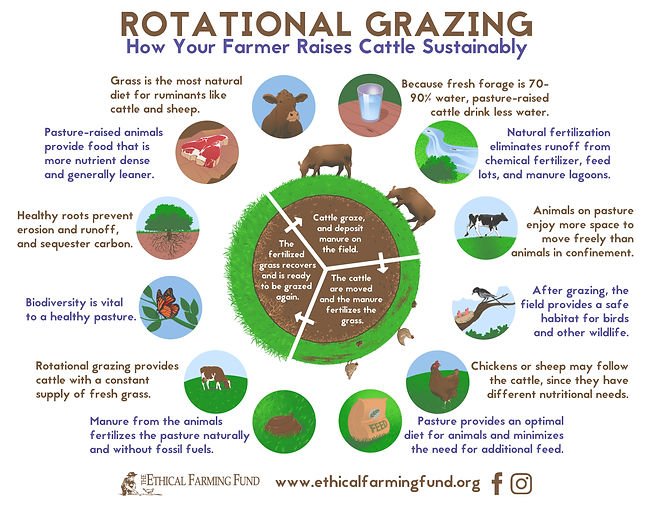Benefits of Rotational Grazing