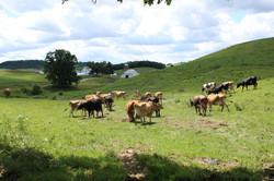 Lone Oak Farm