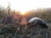 Savage Mountain Sleeping Pigs.jpg