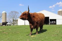 Pasture Perfect Beef