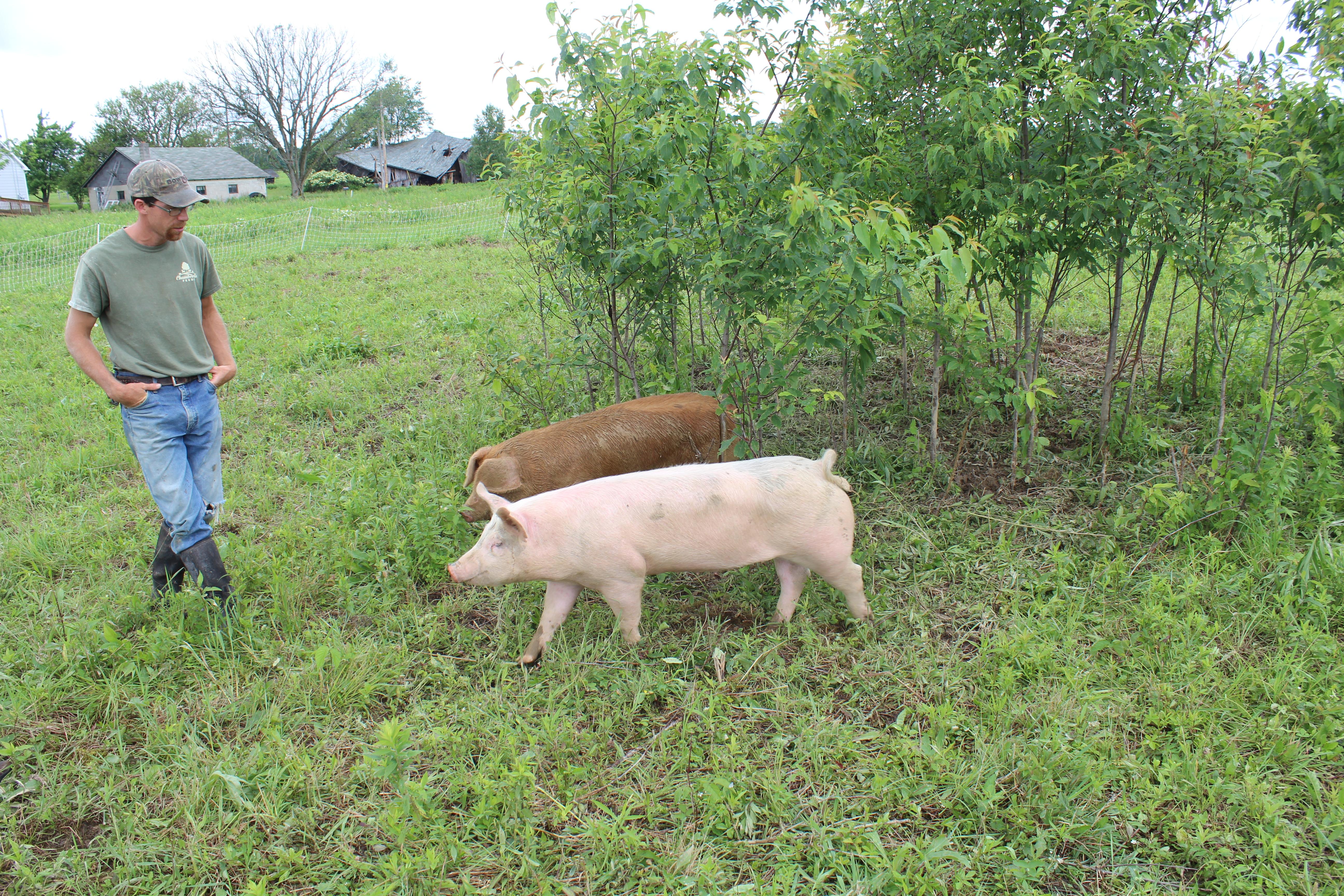 Pasture Fed