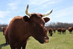 Auburn Meadow Farm