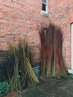 Willow sorting, processing Basketmakers and weavers, Jenny Crisp and Issy Wilkes