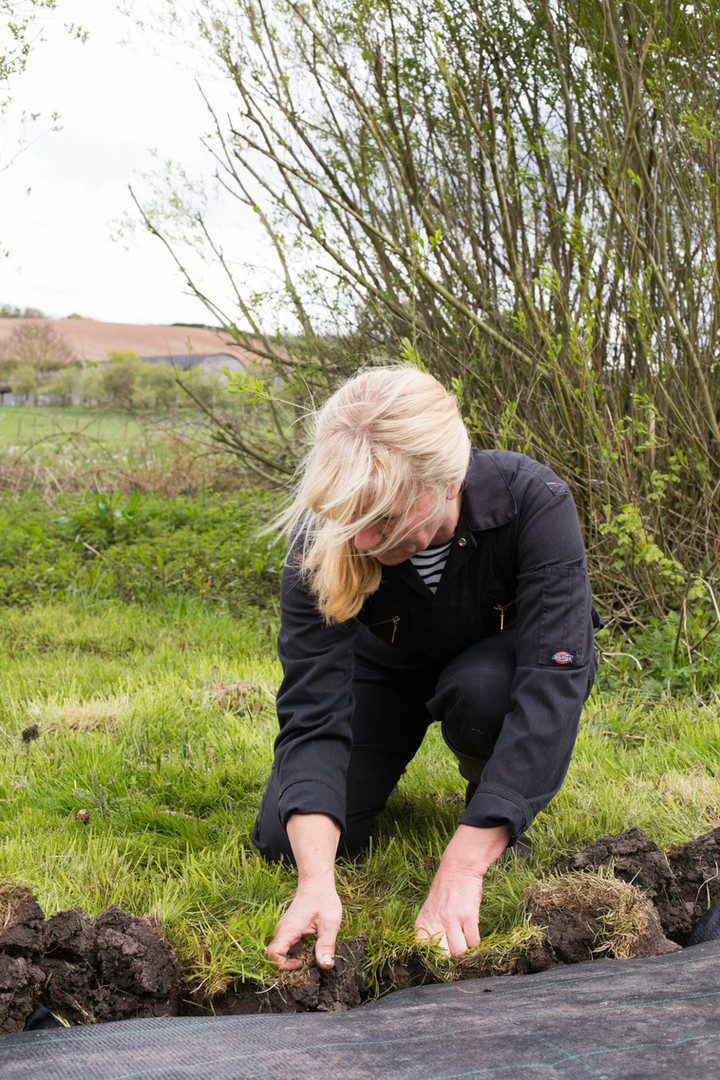 Jenny Crisp planting willow field