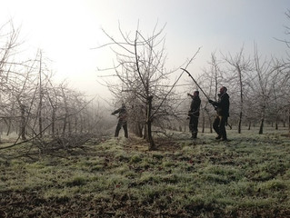 FROSTY FINGERS WHILST WE PRUNE!
