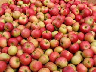 THIS MONTH WE PICK APPLES