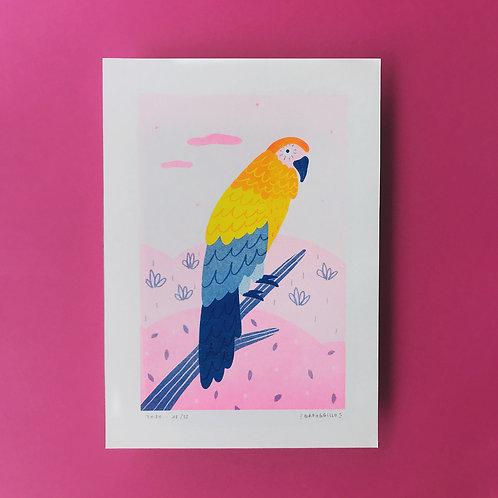 Parrot · Riso · A4