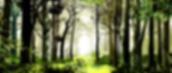 Woods drop two new preview size.jpg