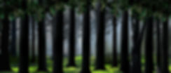 New Woods Drop less fog preview size.jpg
