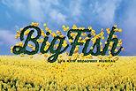 Big Fish Logo-2-e1567606297699.jpg