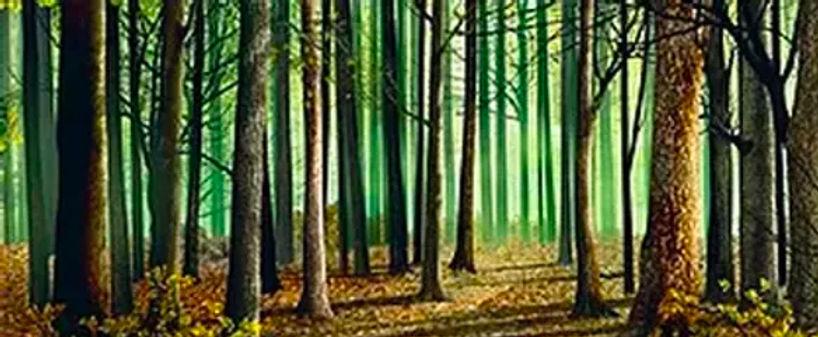D185 Woods 17' x 40'.jpg