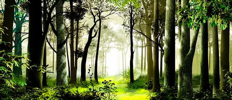D184 Woods with path 17' x 40'.jpg