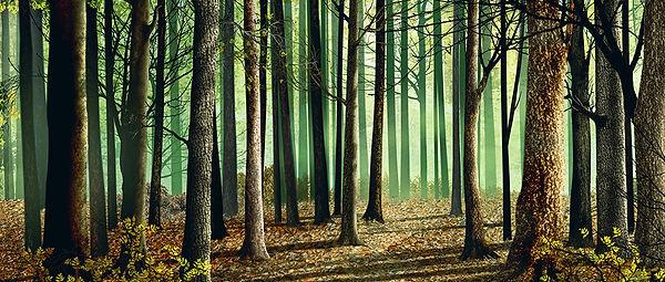 D 185 Full Size Woods.jpg.crdownload.jpg