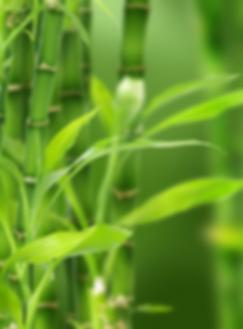 Feng Shui, Feng Shui Beratung, Feng Shui Tipp Pflanzen, Chinesische Astrologie, Beratung Zürich Opening Doors