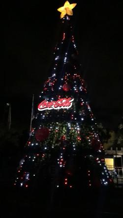 árbol Coca Cola 15 m