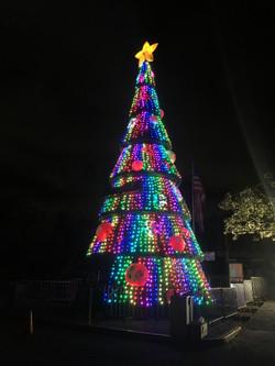 árbol Cattri 15 m