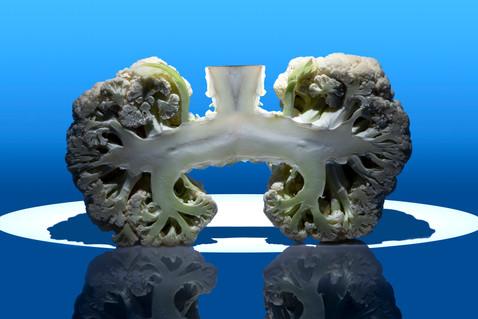 Lungs/Cauliflower