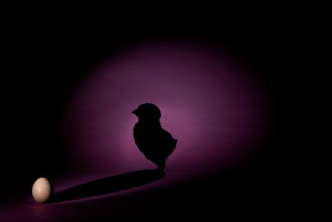 Birth/Egg+Chicken shadow