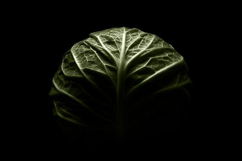 Brain/Cabbage