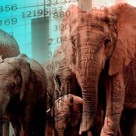 Efeito Manada: O que esse termo significa no Mercado Financeiro?