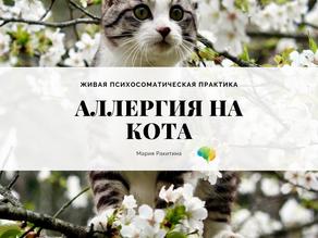 Живая психосоматическая практика: Аллергия на кота. Опыт восстановления.