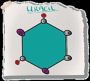 Uracil Nitrogenous Base (A-Level Biology) Pyrimadine Bases
