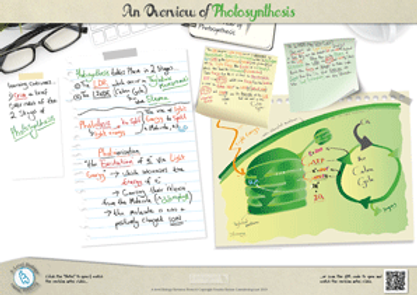 An Overview of Photosynthesis A3 Poster PDF for A Level Biology