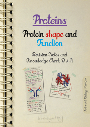 A Level Biology: Proteins - The Shape and Function of Enzymes,  Antibodies, Transport Proteins and Structural Proteins, Revision Notes with Knowledge Check Questions and Answers pdf
