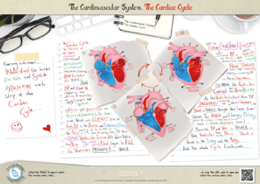 139.-Cardiac-cycle-A3-Poster.png