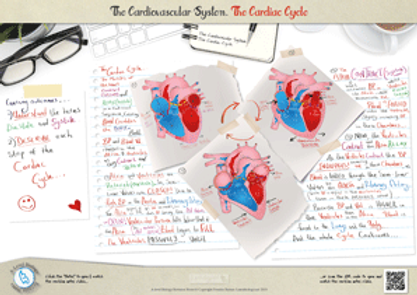 The Cardiac Cycle for a-level biology revision notes Poster A3 PDF