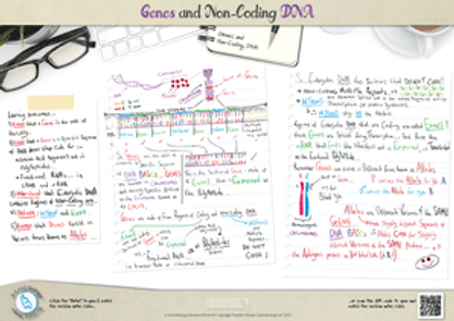 Genetics: Genes and Non-Coding DNA - What are Exons and inions? A3 Poster PDF for A Level Biology