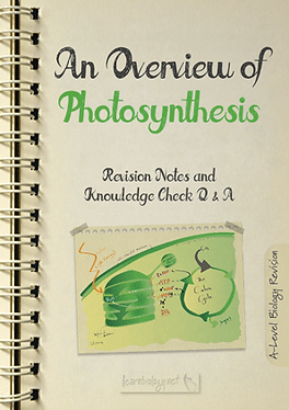 An Overview of Photosynthesis Notes with Knowledge Check Questions and Answers PDF for A- Level Biology