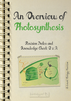 Photosynthesis an Overview PDF