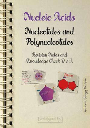 Nucleotide Structure PDF