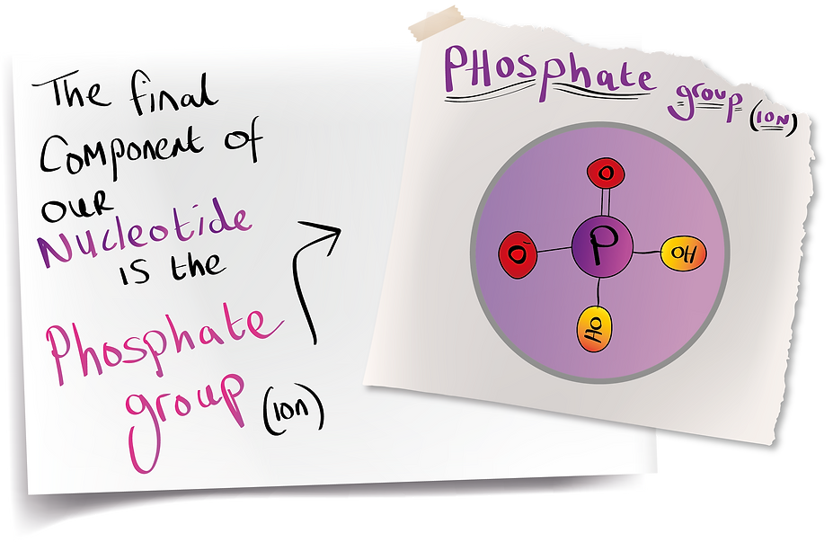 Phosphate Group (A-Level Biology)