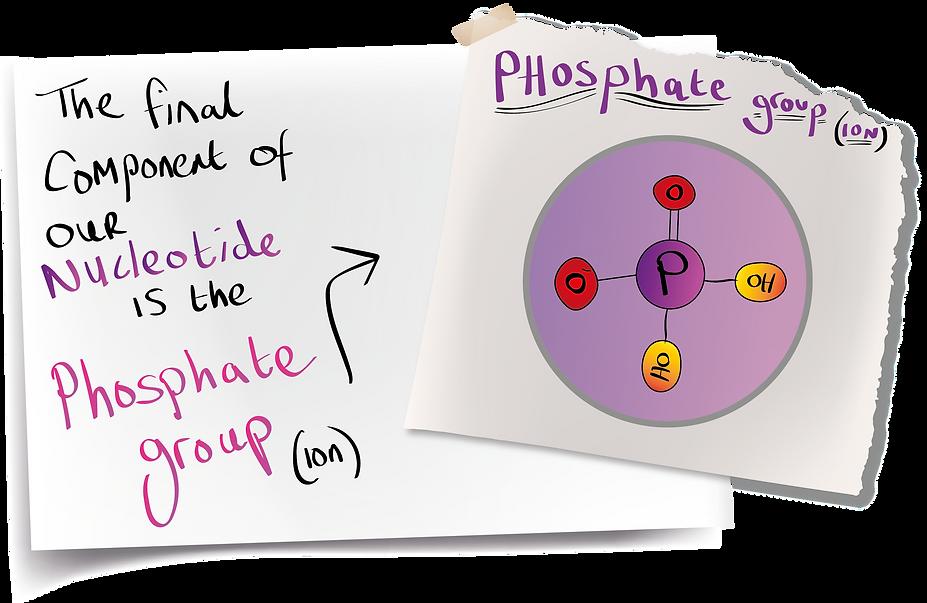 page 3.3 - phosphate.png