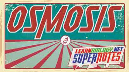 Osmosis---Supernotes---YouTube-Thumbnail