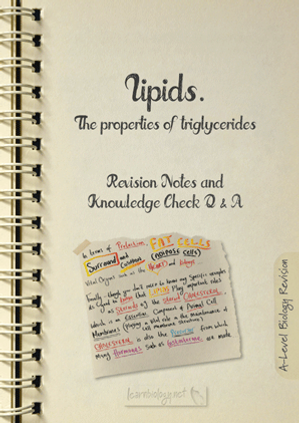 A-Level biology lipids: The Properties of triglycerides Revision Notes with Knowledge Check Questions and Answers pdf