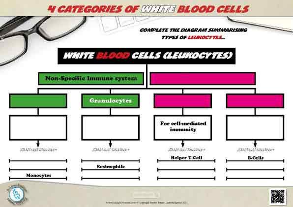 White-Blood-Cells---4-categories.jpg