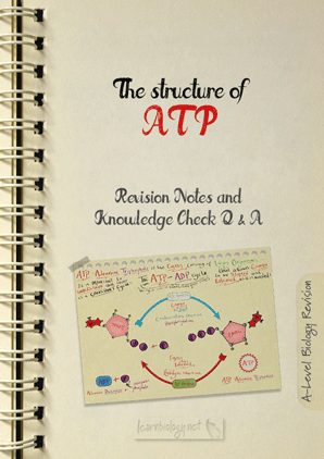 A Level Biology: Adenosine Triphosphate: The Structure of ATP, The ATP-ADP Cycle and the Important properties of ATP Revision Notes with Knowledge Check Questions and Answers PDF