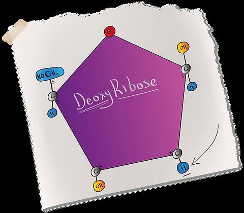 Pentose - Deoxyribose.png