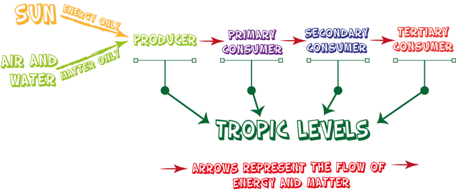 Basic Idea of a Food Chain