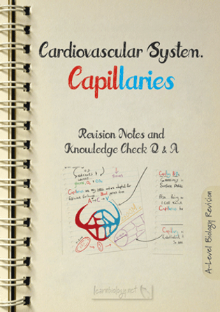 Capillaries structure and function for a-level biology revision notes and knowledge check pdf