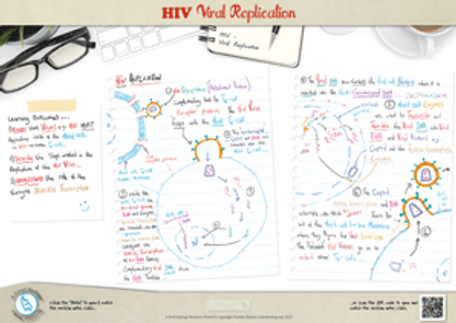 HIV Virus Replication cycle A3 Poster PDF for A Level Biology